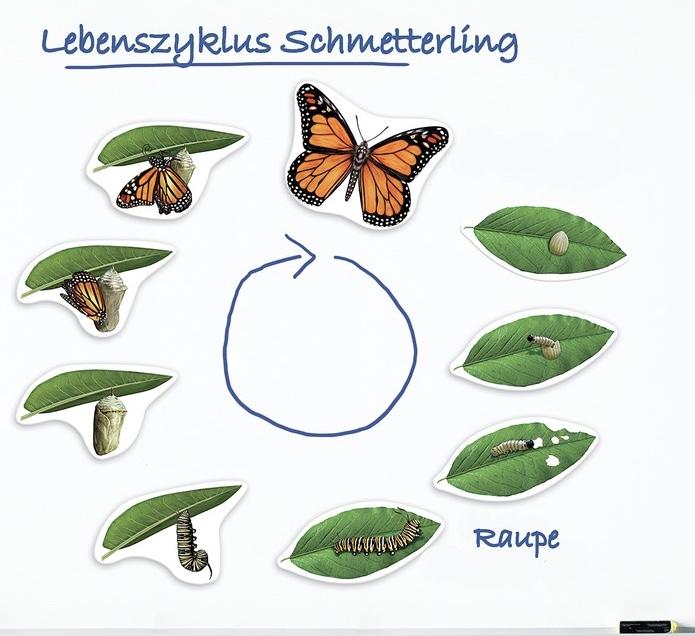 Schmetterlingsprojekt der 1/2e