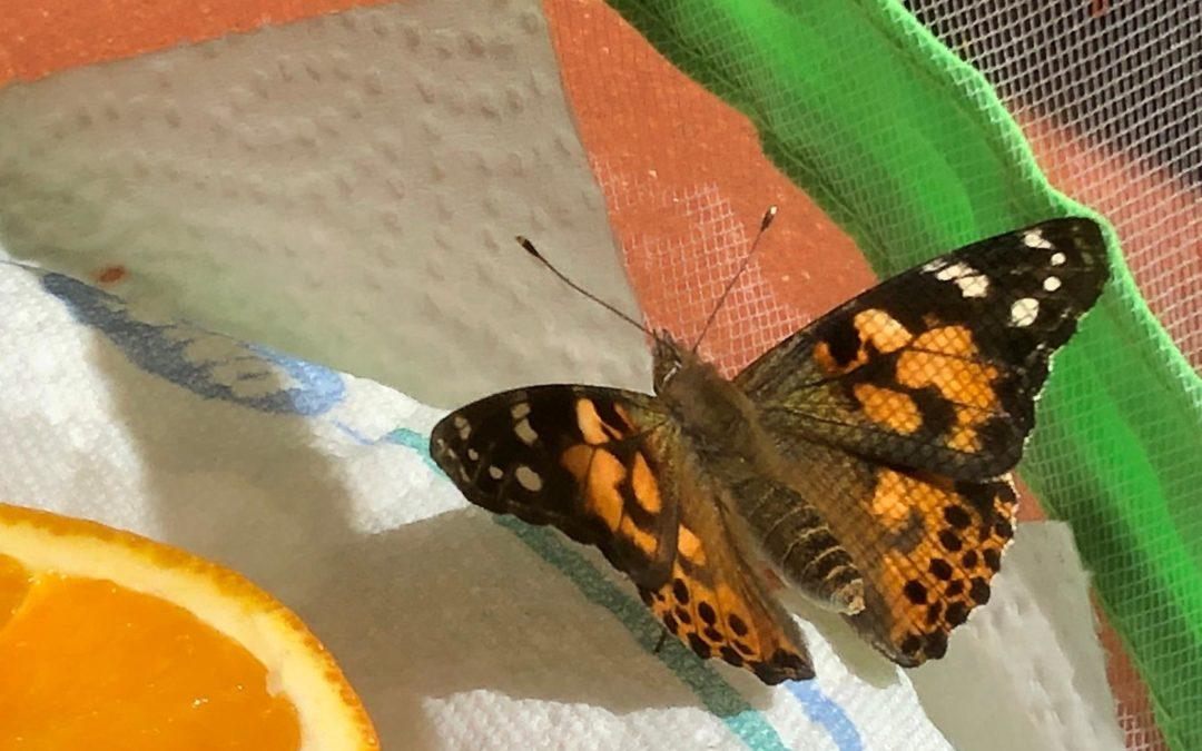 Die Schmetterlinge sind geschlüpft!